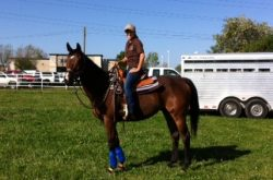 Retraining the older OTTB: Q & A with Julie Baker, founder of Healing Arenas